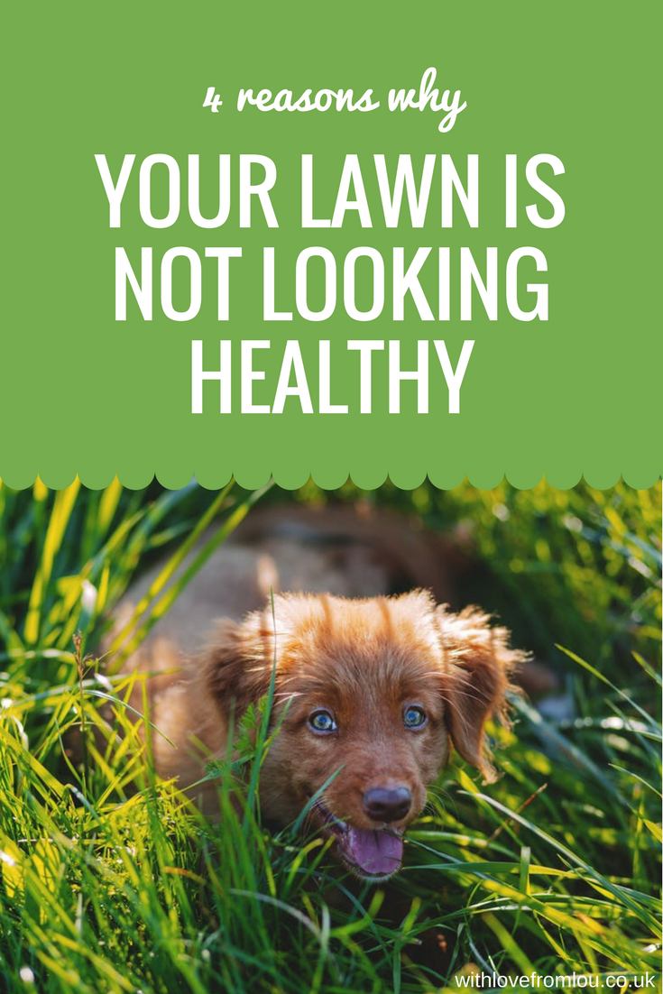 4 Reasons Why Your Lawn is Not Looking Healthy