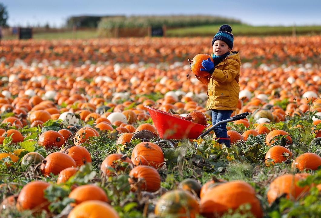 Little boy picking pumpkins
