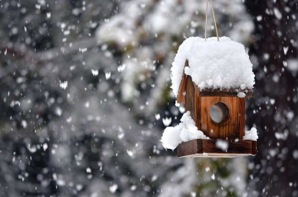 Winter bird shelter